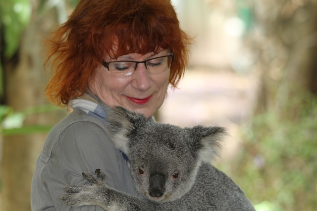 koala encounter in Australia