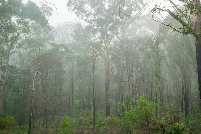 mist | rainforest Sydney